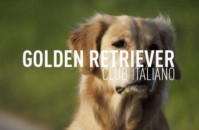 GOLDEN RETRIEVER CLUB ITALIANO