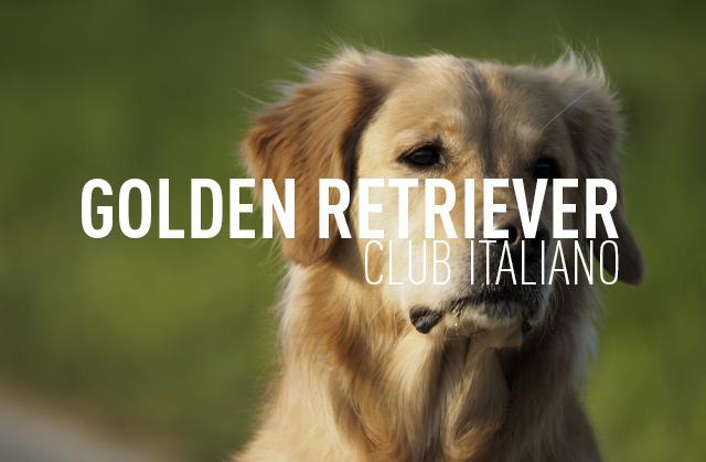 GOLDEN RETRIEVER CLUB ITALIANO